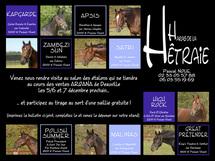 Le haras de la Hêtraie au salon des étalons de Deauville, du 5 au 7 Décembre 2009