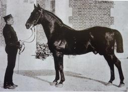 NIGER au Haras du Pin Etalon national de 1875 à 1885