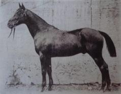 JAMES WATT Etalon de 1891 à 1905