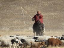 Le retour de Mongolie !