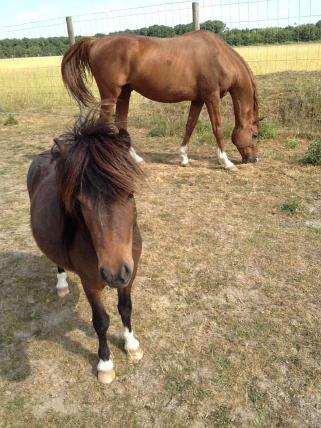 Biographie de Sylvie Overnoy, vue par son cheval!