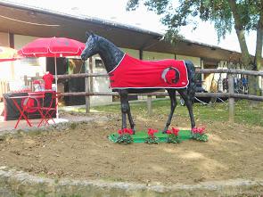 Une nouvelle discipline sportive s'installe dans la sarthe : le trot à poney