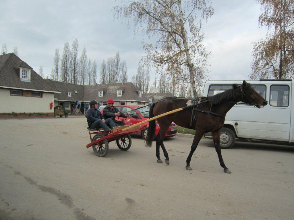 Site de rencontres equitation